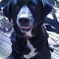 Adopt A Pet :: Maddie - Tallahassee, FL