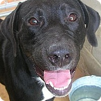 Adopt A Pet :: Otis - dawson, GA