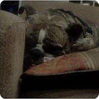 Adopt A Pet :: Stella - Lexington, TN