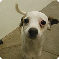 Adopt A Pet :: Kiefer - Phoenix, AZ