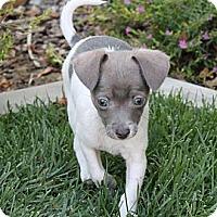 Adopt A Pet :: Minnie - La Habra Heights, CA