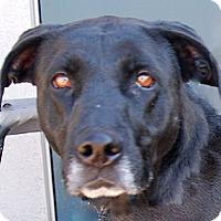 Adopt A Pet :: Charcoal - Portola, CA