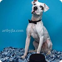 Adopt A Pet :: Kohl - Baton Rouge, LA