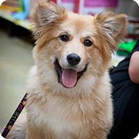 Adopt A Pet :: Cherry - Great Bend, KS