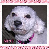 Adopt A Pet :: Adopted!! Skye-IL - Tulsa, OK