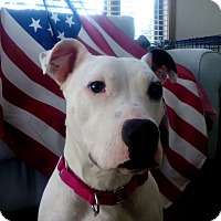 Adopt A Pet :: Ada - West Allis, WI