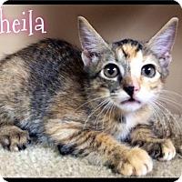 Adopt A Pet :: Sheila - 297 / 2016 - Maumelle, AR