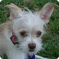 Adopt A Pet :: A Magby - Fresno, CA