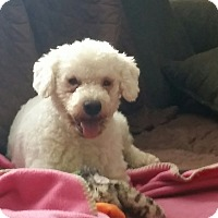 Adopt A Pet :: Sampson - pending - Woonsocket, RI