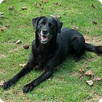 Adopt A Pet :: Priscilla - Temple, GA