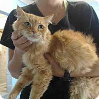Adopt A Pet :: URGENT on 9/20 San Bernardino - San Bernardino, CA