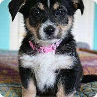 Adopt A Pet :: Tikka - Hagerstown, MD
