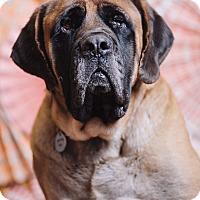 Adopt A Pet :: Rocky Road - Portland, OR