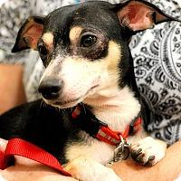 Adopt A Pet :: Fritzi - Toledo, OH
