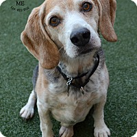 Adopt A Pet :: Lucky - Youngwood, PA
