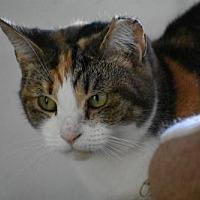 Adopt A Pet :: Callie - Devon, PA