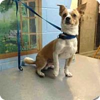 Adopt A Pet :: A499545 - San Bernardino, CA