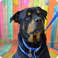 Adopt A Pet :: Bubba - South Amana, IA