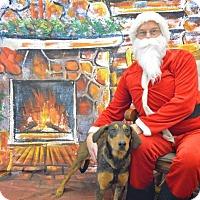 Adopt A Pet :: SARAH - Coeburn, VA