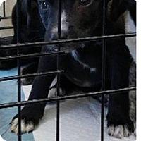 Adopt A Pet :: Meredith - Danbury, CT