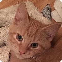 Adopt A Pet :: Milty - O'Fallon, MO