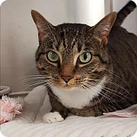 Adopt A Pet :: Lima - Umatilla, FL