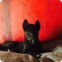Adopt A Pet :: Caden - Memphis, TN