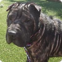 Adopt A Pet :: Isabelle - Gainesville, FL