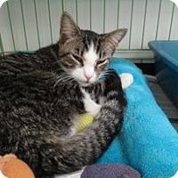 Adopt A Pet :: Leo - Island Park, NY