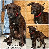 Adopt A Pet :: Lillith - Evansville, IN