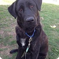 Adopt A Pet :: Chong - Hamilton, ON
