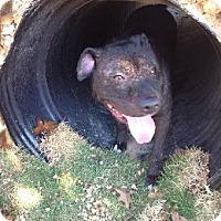 Adopt A Pet :: Zeke - Odenville, AL