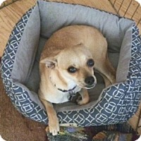 Adopt A Pet :: Cheerio - Seattle, WA