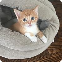 Adopt A Pet :: Eli - Island Park, NY
