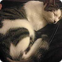 Adopt A Pet :: Luna - Baldwin Park, CA