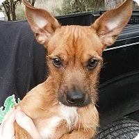 Adopt A Pet :: Powell - Gainesville, FL