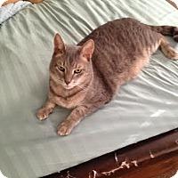 Adopt A Pet :: Bullseye - Columbus, OH
