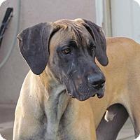 Adopt A Pet :: Forrest - El Paso, TX