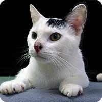 Adopt A Pet :: Monty - New Castle, PA