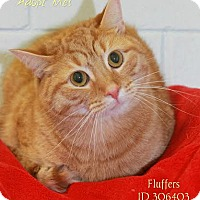 Adopt A Pet :: Fluffers - Camden, DE