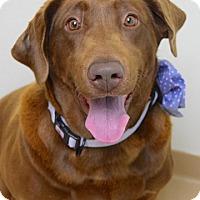 Adopt A Pet :: Mattie - Dublin, CA