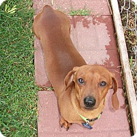 Adopt A Pet :: Howie-Pending Adoption - Omaha, NE
