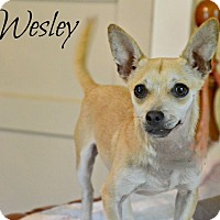 Adopt A Pet :: Wesley - Chester, CT