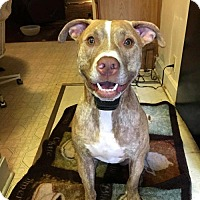 Adopt A Pet :: SONNY - richmond, VA