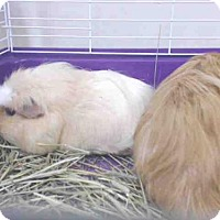 Adopt A Pet :: RUFUS - Palmer, AK