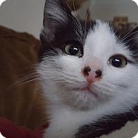 Adopt A Pet :: Piggy - Irwin, PA