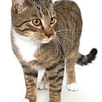 Adopt A Pet :: PETRIE - Gloucester, VA