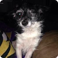 Adopt A Pet :: Paisley - Walker, LA