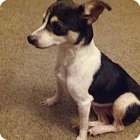 Adopt A Pet :: Rowena - Pataskala, OH