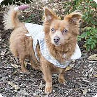 Adopt A Pet :: Sammy - Agoura, CA